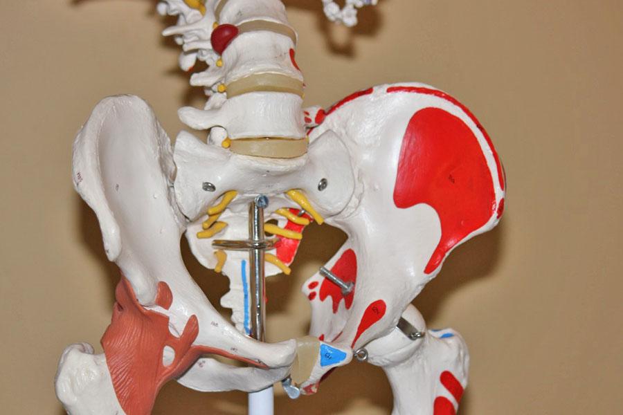 La sélection de livres sur l'anatomie - Quels sont les meilleurs ouvrages pour apprendre l'anatomie ?