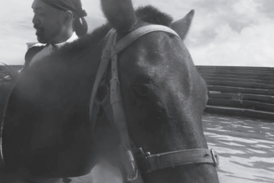 Les effets du shiatsu sur le cheval - © Tomotomo Edo